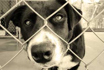 sad dog at fence