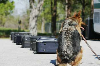 police dog luggage