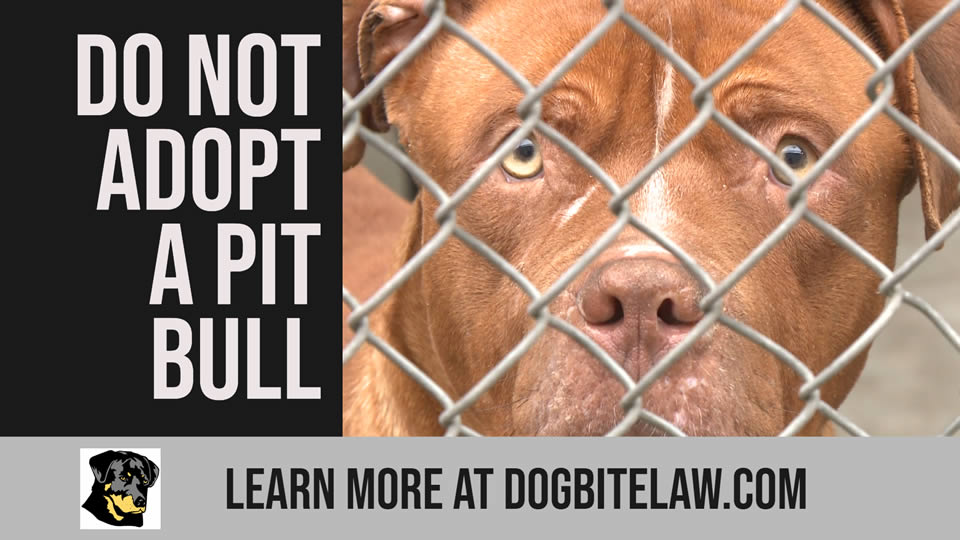 Do Not Adopt a Pit Bull 01